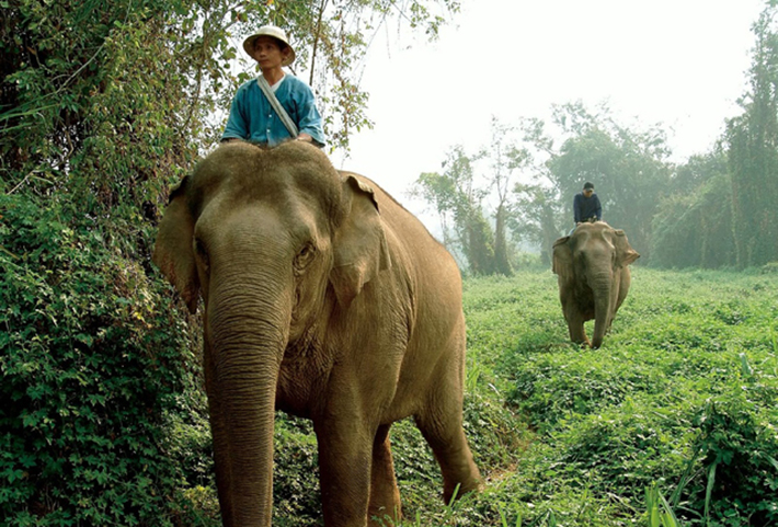 CHR_014_elephant-run_636x431 Hotels and Bespoke Experiences Hotels and Bespoke Experiences CHR 014 elephant run 636x431