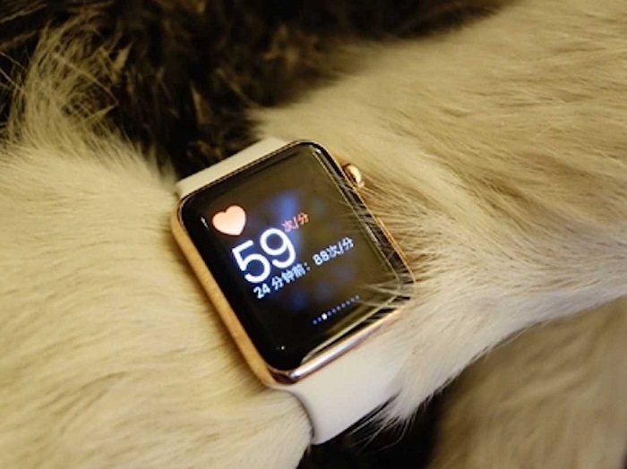 The Most Expensive Apple Watch Bought For a Dog! The Most Expensive Apple Watch Bought For a Dog! The Most Expensive Apple Watch Bought For a Dog! 25