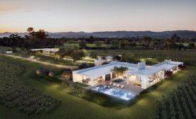 Modern Vineyard in Napa Valley1