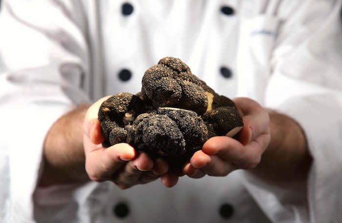 all-about-hunting-truffles2 truffles All about hunting truffles All about hunting truffles2