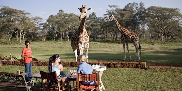 Kenya-0098 Luxury Dinner with Giraffes Luxury Dinner with Giraffes Luxury Dinner with Giraffes