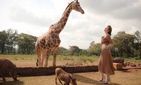 luxury-dinner-with-giraffes1
